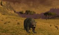 Medvědice na výletě.